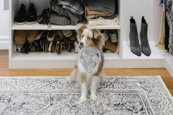 Cute dog in walk in closet